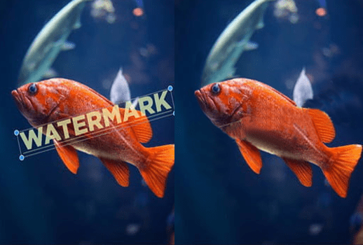 wortermark removed fish